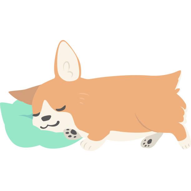 眠っている犬 (コーギー) ベクターアートイラスト