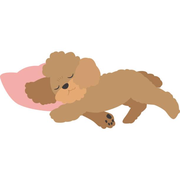 眠っている犬 (トイプードル) ベクターアートイラスト