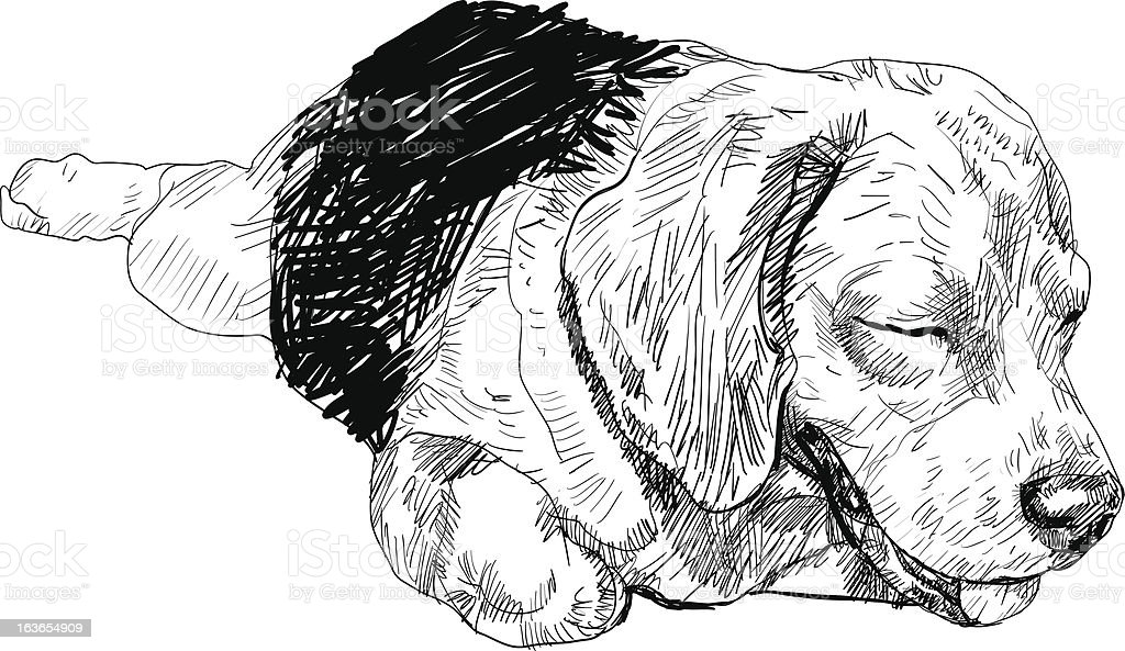 Sleepy Beagle royalty-free sleepy beagle stock vector art & more images of animal