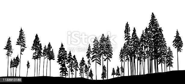 treeline with pine trees for the Christmas season designs