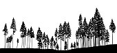 Slender Trees In The Forest