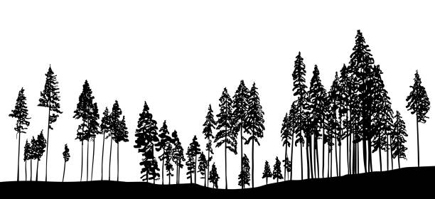 Slender Trees In The Forest treeline with pine trees for the Christmas season designs wilderness stock illustrations