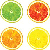 slice of citrus fruits drawing by watercolor