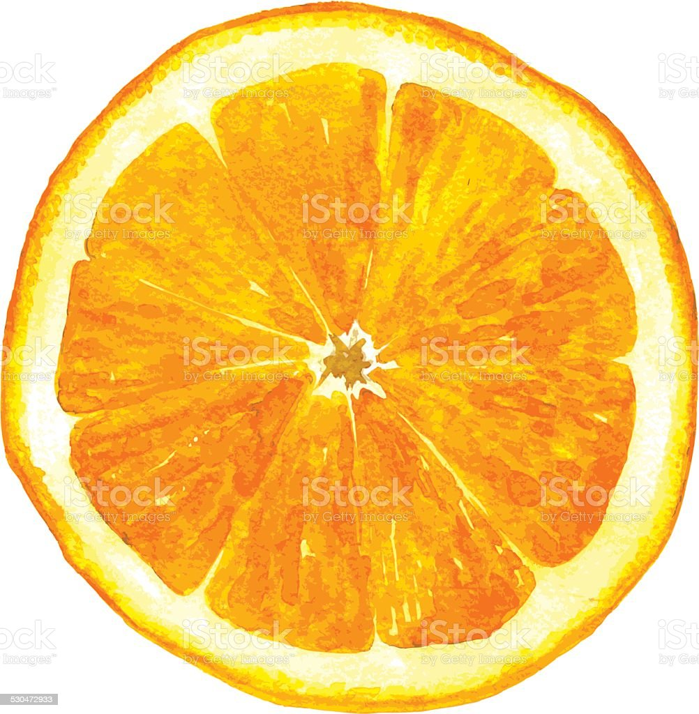 slice of orange drawing by watercolor vector art illustration