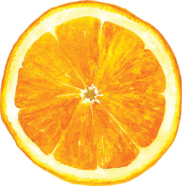 ilustrações de stock, clip art, desenhos animados e ícones de fatia de laranja desenho de aguarela - orange