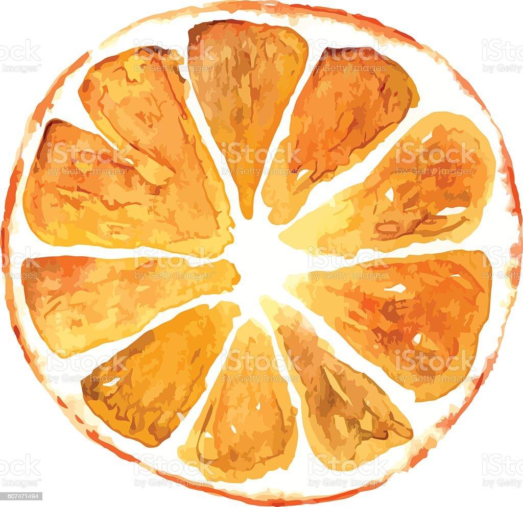 Slice of orange isolated on white background vector art illustration
