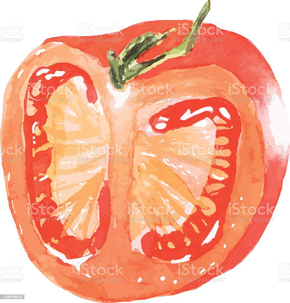 Sliced juicy red tomato - vector watercolor painting vector art illustration
