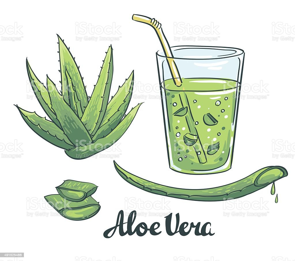 Slices of Aloe Vera in a glass. vector art illustration