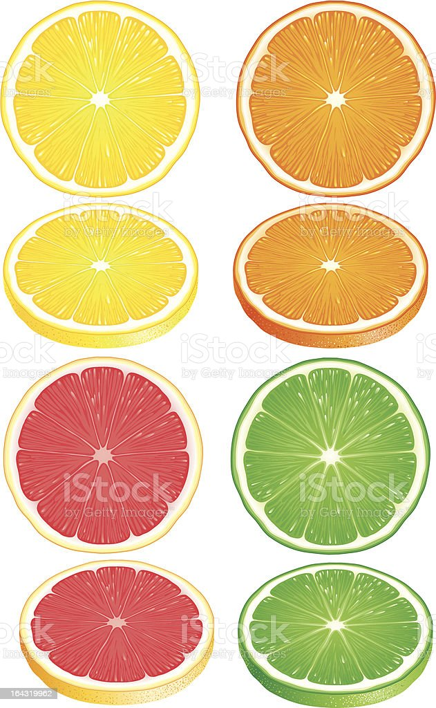 Slices of Citrus fruits royalty-free stock vector art