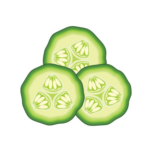 slices of green cucumber on white background. vector illustration slices of green cucumber on white background. vector illustration pickle slice stock illustrations