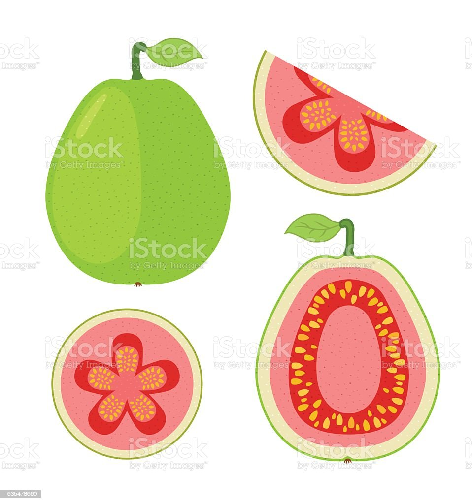 slices of guava whole exotic fruit flat cartoon vector style stock