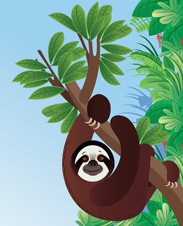 Sloth Animal