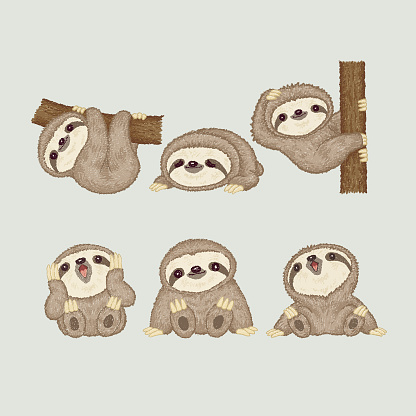 Sloth of various poses
