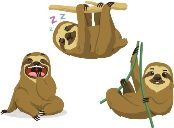 faultier regenwald zwei nahtverzierung lazy säugetier hängende faultiere - faul ast stock-grafiken, -clipart, -cartoons und -symbole