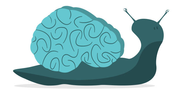 slow brain - snail stock illustrations