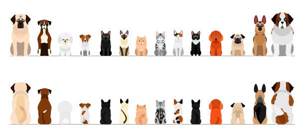 小型と大型の犬と猫のボーダーセット、全長、前部および背部 ベクターアートイラスト