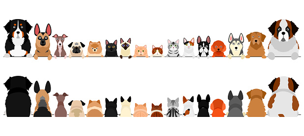 small and large dogs and cats border set, upper body, front and back