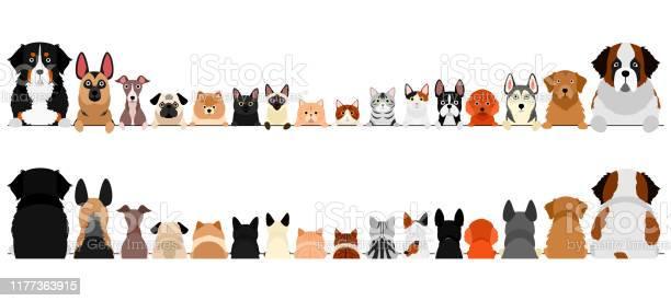 Small and large dogs and cats border set upper body front and back vector id1177363915?b=1&k=6&m=1177363915&s=612x612&h=b0vpq9rowtt7dznpy6jpgigzsrhvnzegli mfuulrh4=