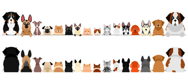 small and large dogs and cats border set, upper body, front and back small and large dogs and cats border set, upper body, front and back husky dog stock illustrations