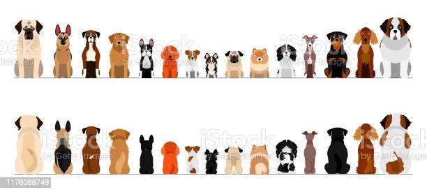 Small and large dogs border border set full length front and back vector id1176088749?b=1&k=6&m=1176088749&s=612x612&h=wckiqvpcgcgpwb48vie0m63lde00cs1fx jaikg6llo=