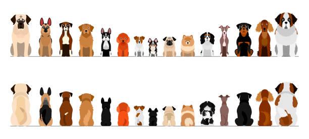 小型および大型犬ボーダーセット、全長、前部および背部 ベクターアートイラスト