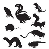 A vector silhouette illustration of small wild animals including a skunk, mouse, weasel, chipmunk, squirrel, robin, and marmoset.