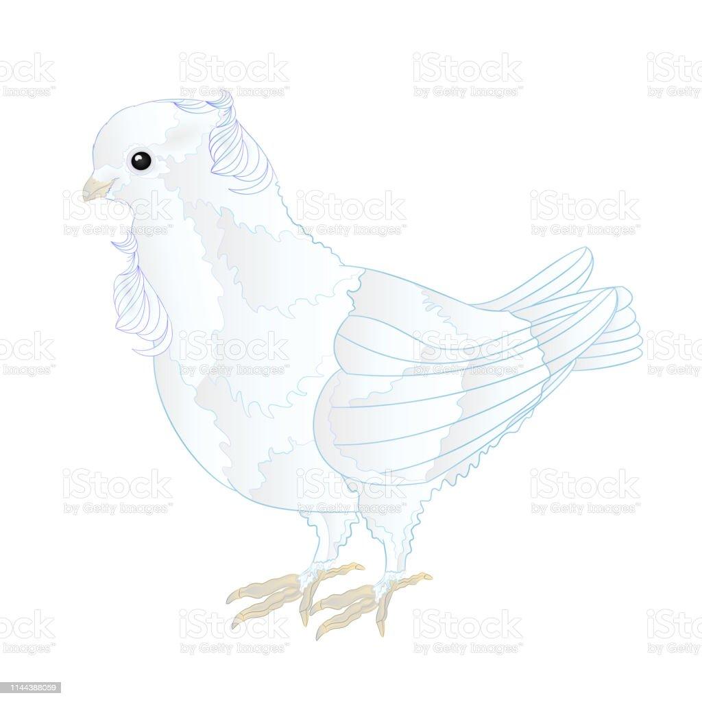 Kucuk Kus Sevimli Sus Beyaz Guvercin Uzerinde Beyaz Arka Plan