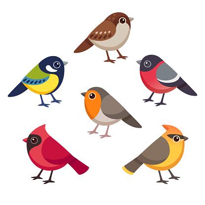 Small birds cartoon drawing set