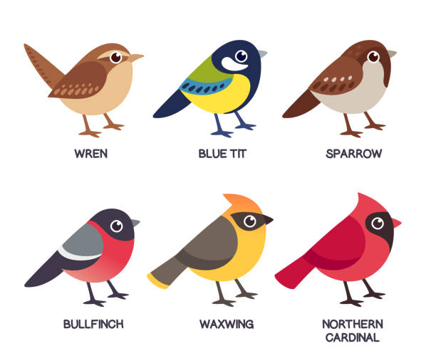 Small birds set Set of cute cartoon small birds: Cedar Waxwing, Northern Cardinal, common Sparrow, Wren, Blue Tit and Bullfinch. Simple drawing style, isolated clip art vector illustration. bird stock illustrations