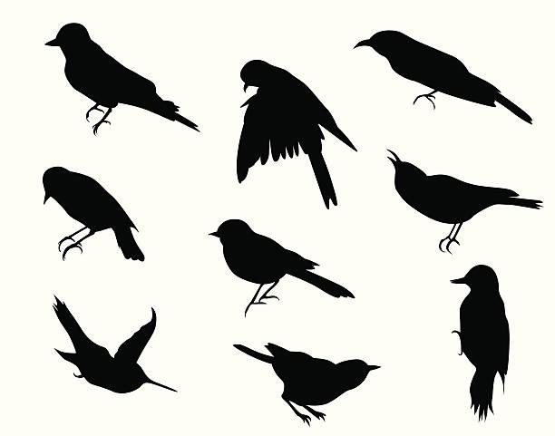 stockillustraties, clipart, cartoons en iconen met small birds vector silhouette - zanger vogel