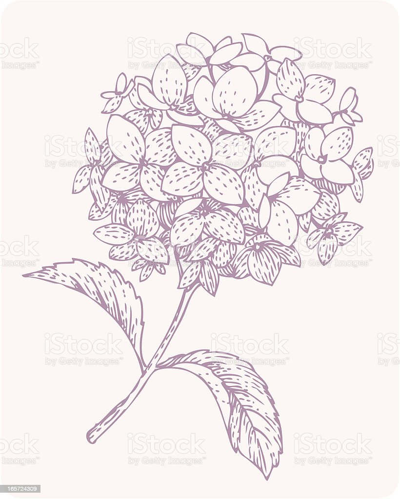 small branch of hydrangea vector art illustration