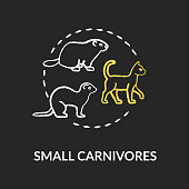 Small carnivores chalk RGB color concept icon. Wild and domestic animals. Food chain predators. Land ecosystem idea. Vector isolated chalkboard illustration on black background