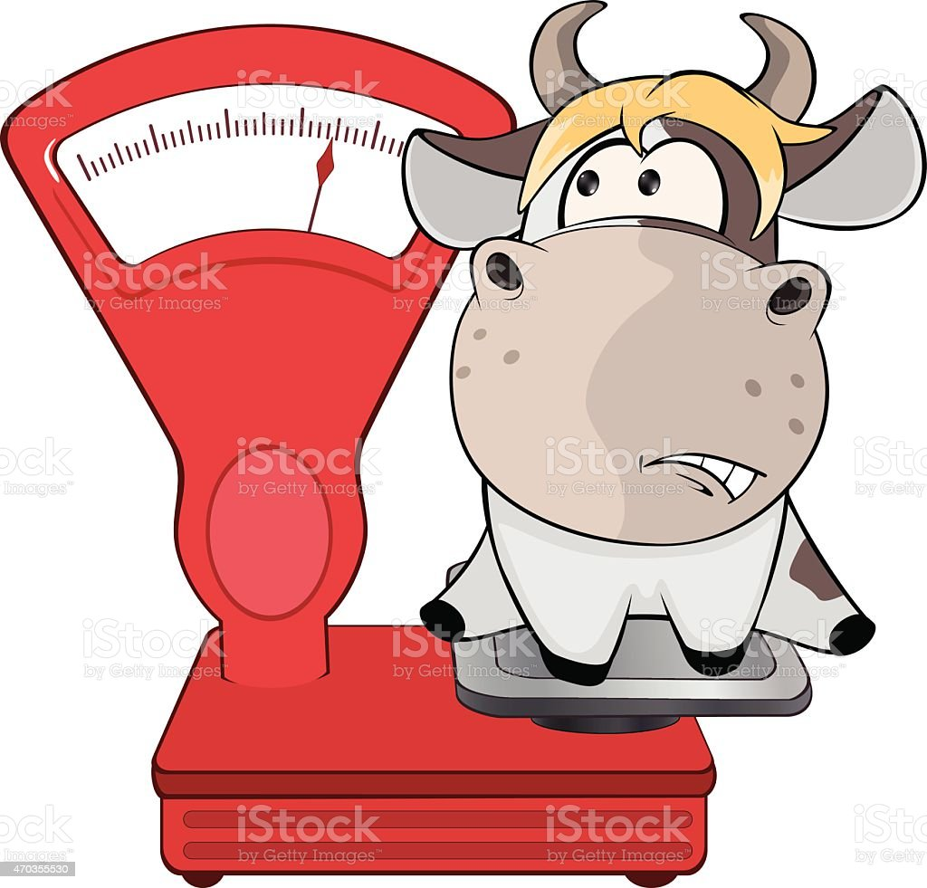 small cow and weighing scale cartoon stock vector art 470355530