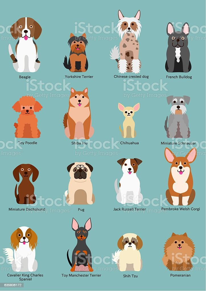 small dog breed vector art illustration