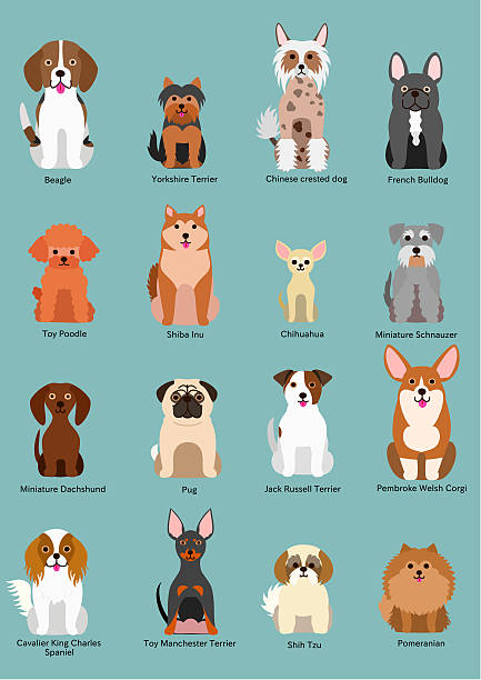 small dog breed ベクターアートイラスト