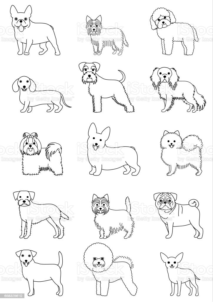 small dog breeds line art set