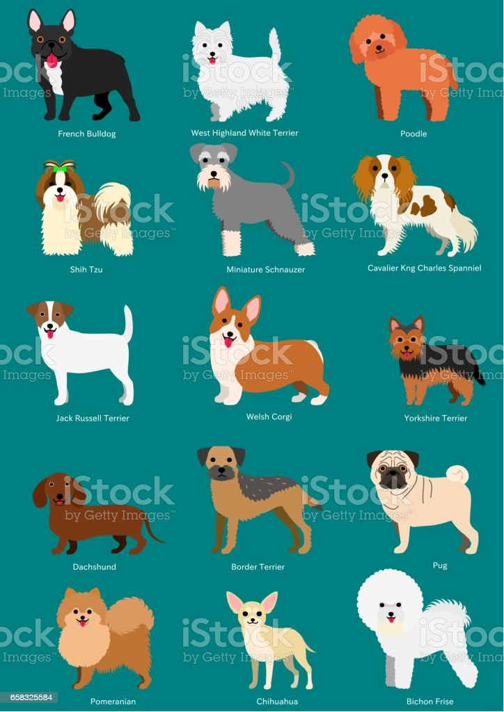 Small Dog Breeds Set With Breeds Names Stock Illustration Download Image Now Istock