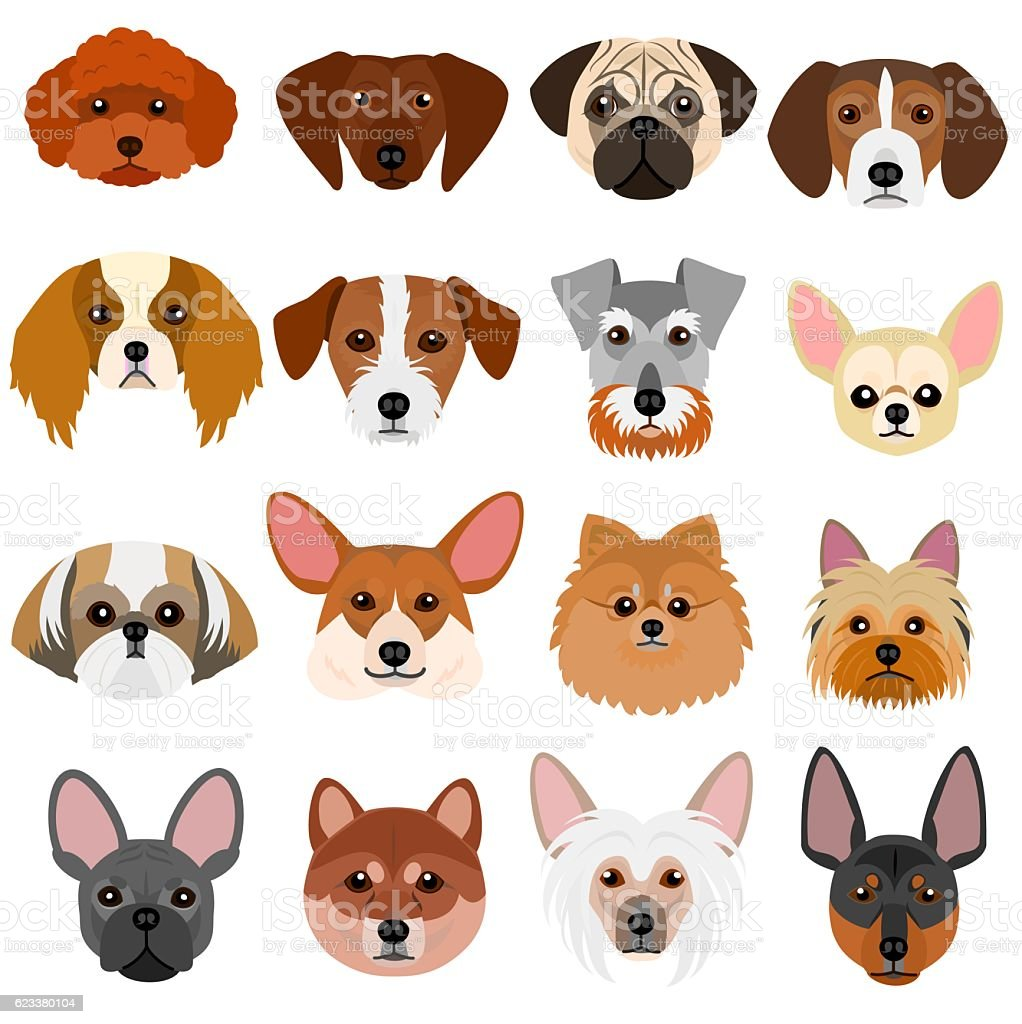 small dog faces set on white background vector art illustration