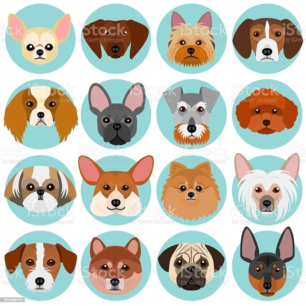 small dog faces set with circle vector art illustration