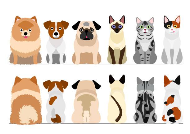 小さな犬と猫のボーダーセット、全長、前部および背部 ベクターアートイラスト