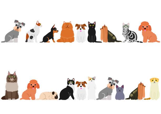 小型犬と猫の境界線に設定 ベクターアートイラスト