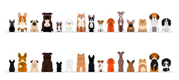小型犬ボーダーボーダーセット、全長、前部および背部 ベクターアートイラスト