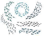Small fish groups