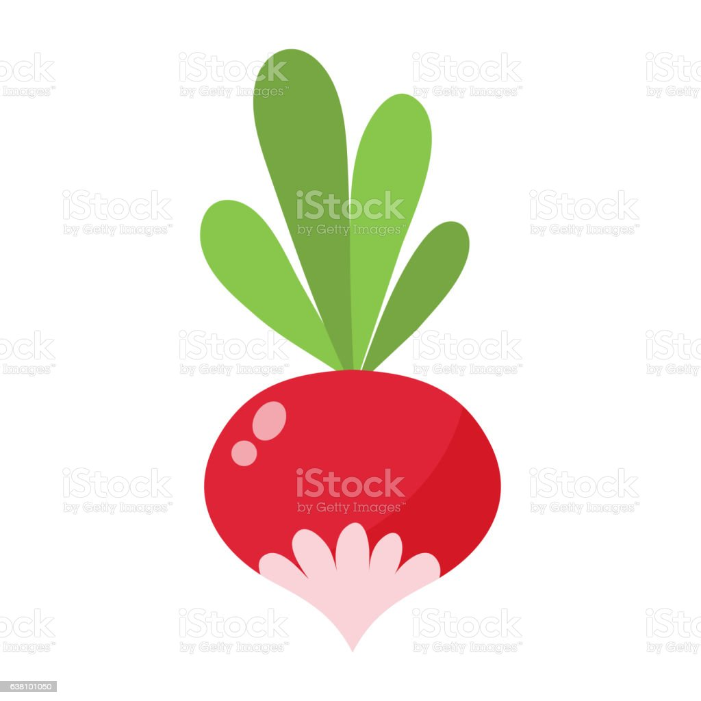 Small garden radish isolated vector illustration.