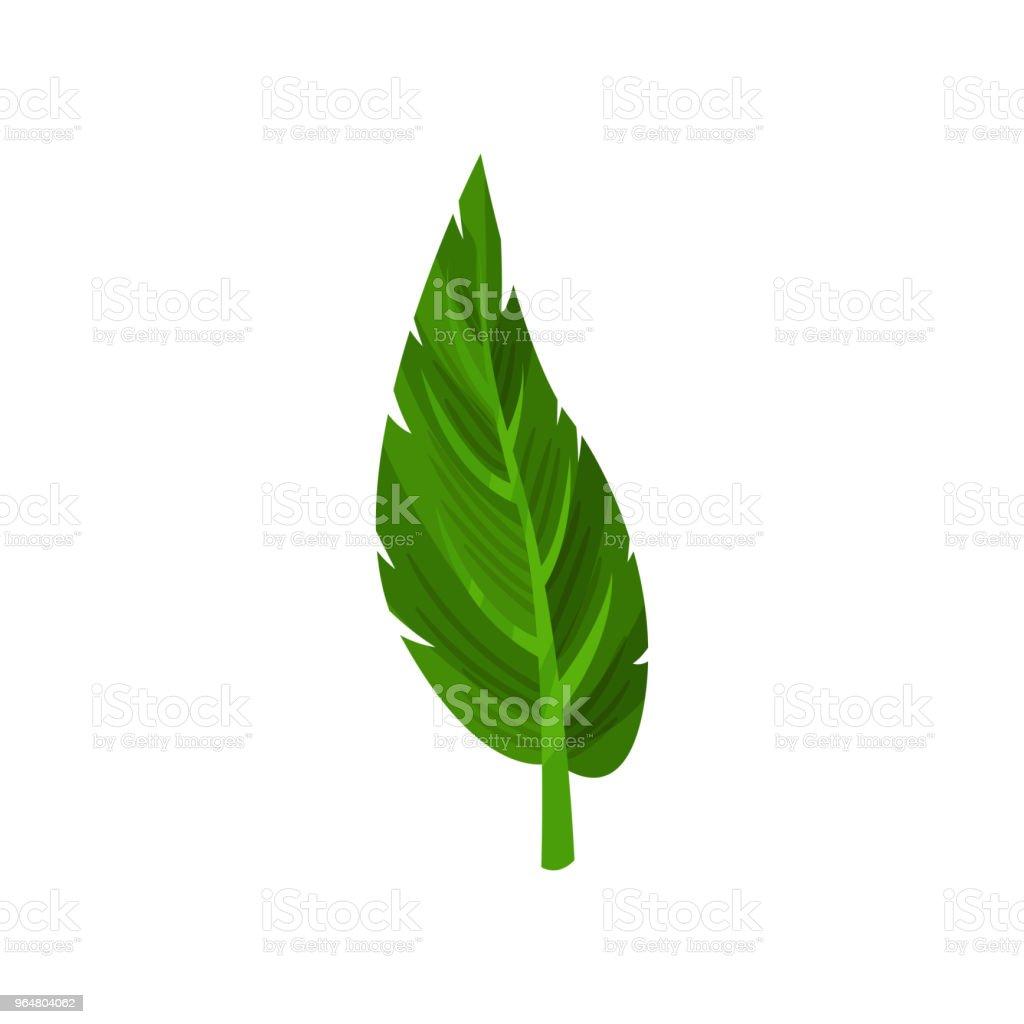 Small green leaf of tropical plant. Nature and botanical theme. Decorative flat vector element for poster or flyer royalty-free small green leaf of tropical plant nature and botanical theme decorative flat vector element for poster or flyer stock vector art & more images of cartoon
