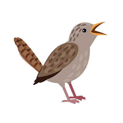 Small grey bird. Cartoon flying character with beak and plumage, winged singing animal of sky