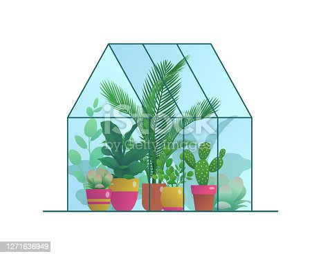 istock Small home greenhouse with various plants 1271636949