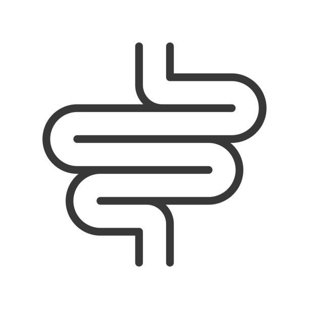 Small intestine, organ icon set Small intestine, organ icon set digestive system stock illustrations