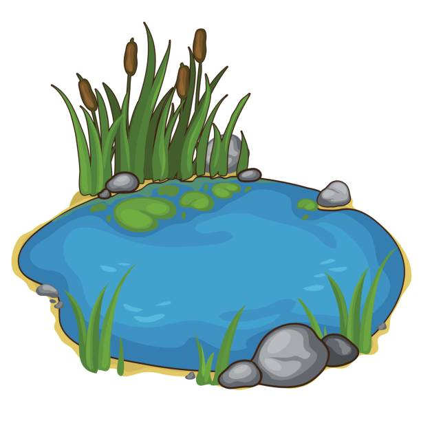 small lake with reeds. vector in cartoon style - pond stock illustrations