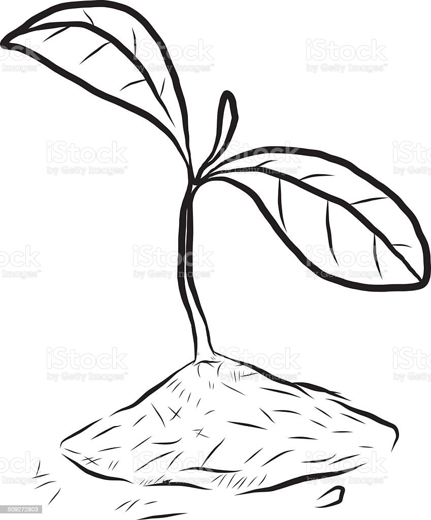 small plant coloring pages - photo#1
